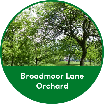 Broadmoor Lane Orchard